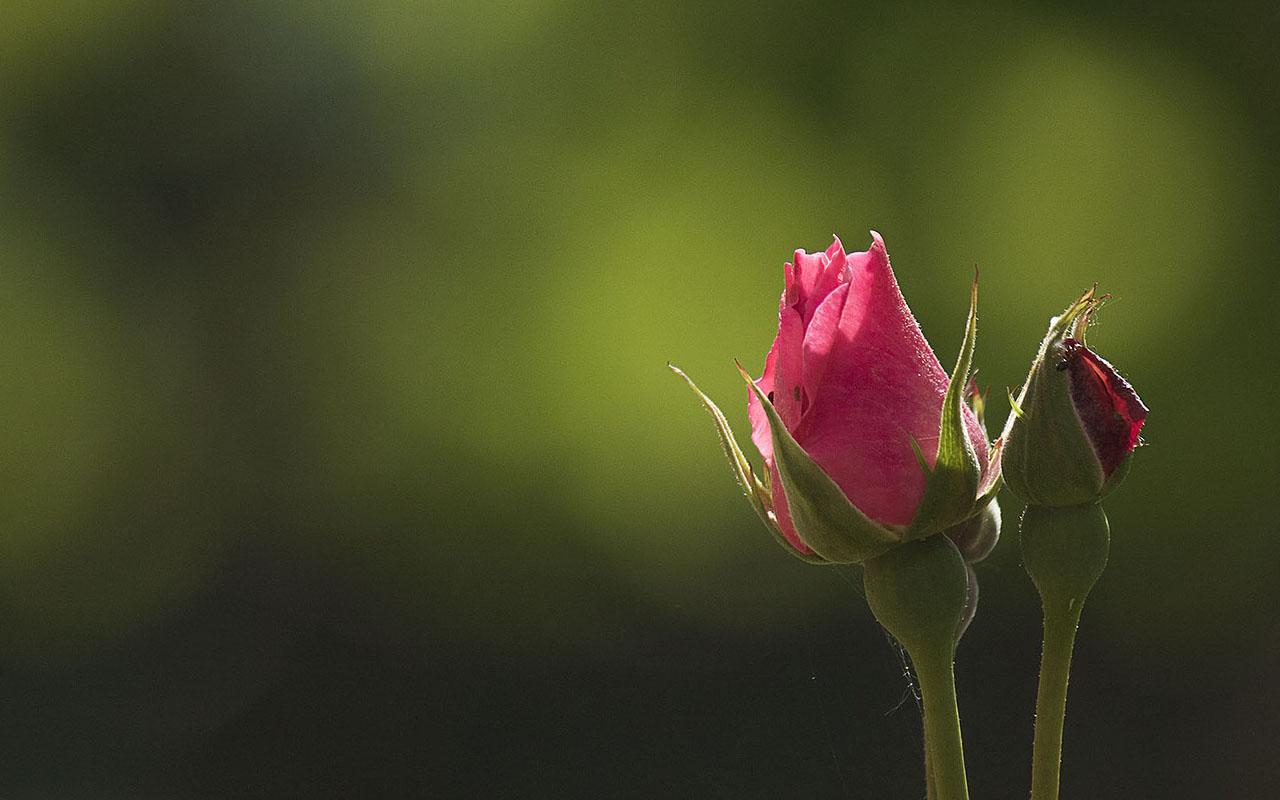 Sırroluşun Rabbimizden Bir Haberdi Bize
