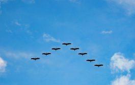 Kuşlar Siren Çalıyor