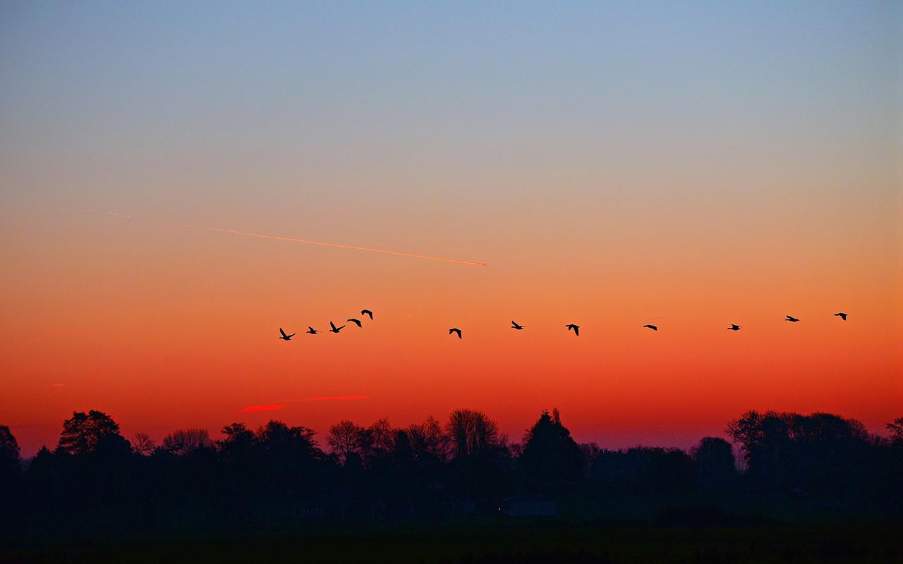Kuşluk Şarkısı