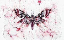 Canım Güzelim Kelebek