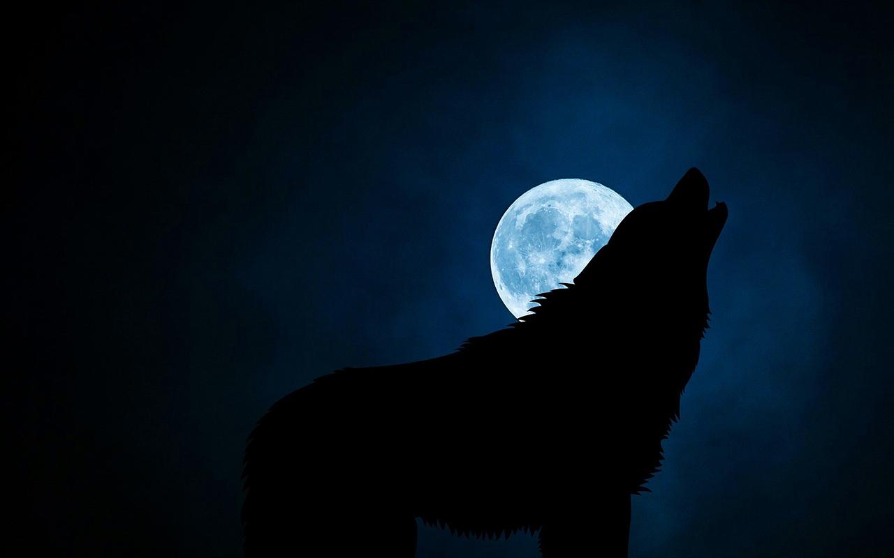 Geceyarısı Köpek