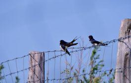 Kuşlu Dünya Tarihi