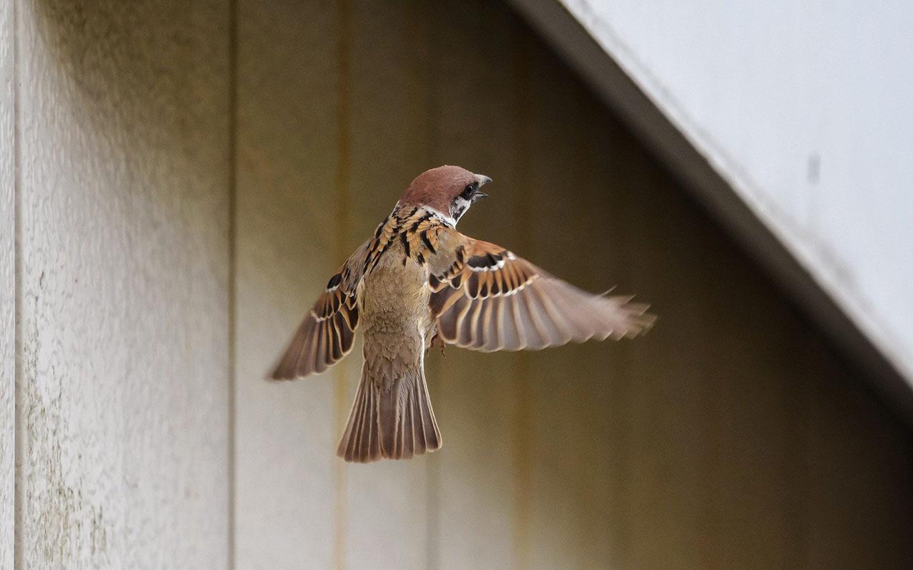Bir Çayır Kuşu Çölde